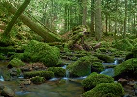 Бесплатные фото лес,деревья,речка,ручей,камни,мох,водопад