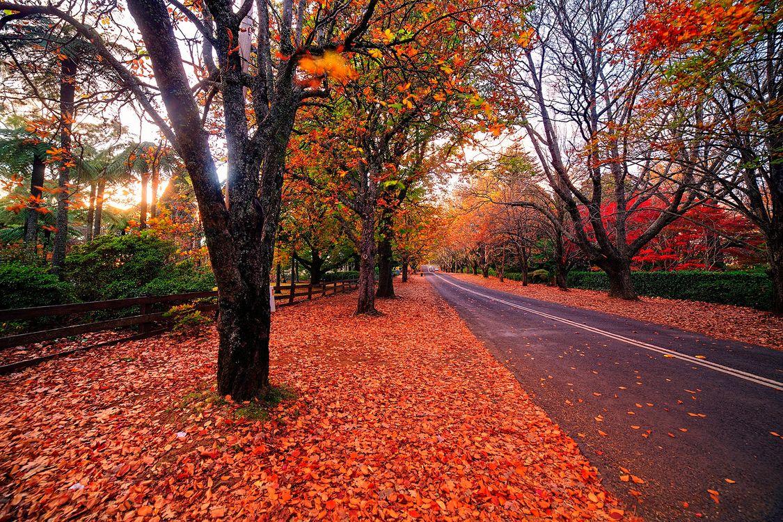 Фото бесплатно осень, деревья, листва, осенние листья, природа, пейзаж, осенние краски, дорога, осенняя дорога, пейзажи - скачать на рабочий стол