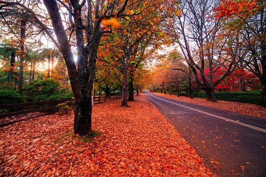 Фото бесплатно пейзаж, дорога, осенние листья