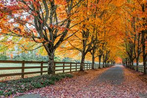 Фото бесплатно дорога, аллея, осень цвета
