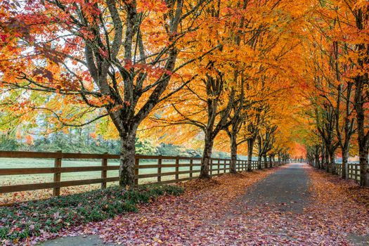 Photo free road, alley, fall colors