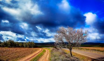 Бесплатные фото поле,небо,дорога,пашня,дерево,пейзаж