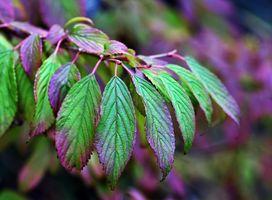 Заставки листья, природа, растения