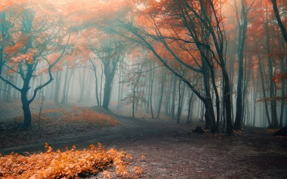 Photo free fog, leaves, autumn