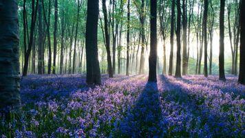 Фото бесплатно капля, цветок, сад