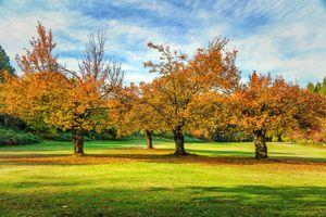 Фото бесплатно деревья, осенние краски, осенние листья
