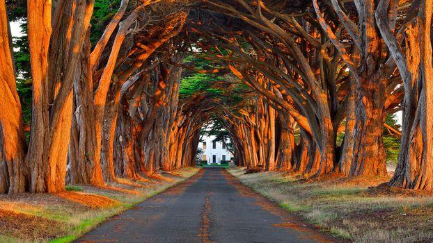 Фото бесплатно дорога, туннель, деревья