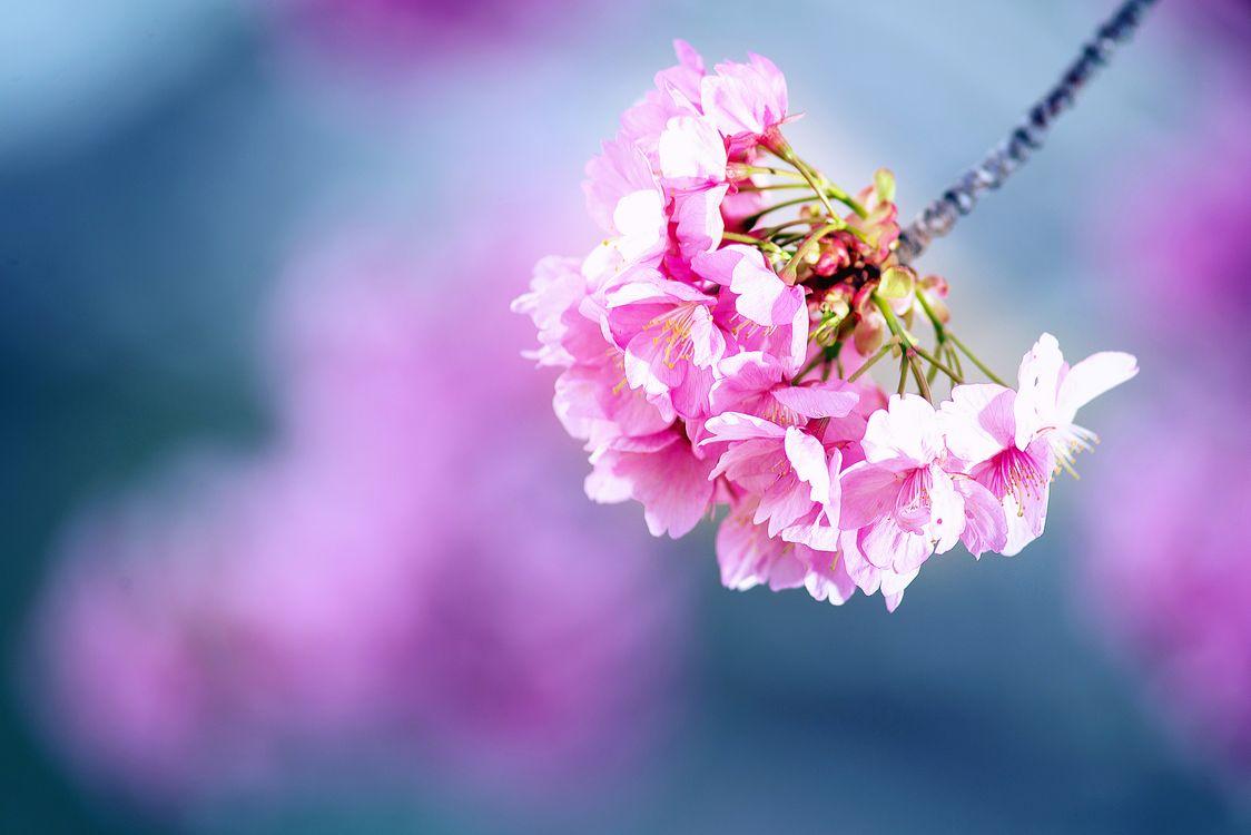 Обои цветы, цветущие ветви, флора картинки на телефон