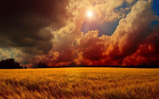 Фото бесплатно облака, поля, трава