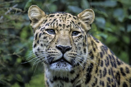 Photo free predator, animal, photograph