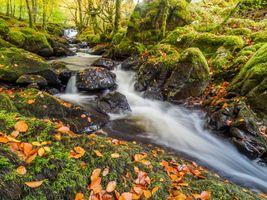 Бесплатные фото осень,речка,ручей,водопад,камни,мох,осенние листья