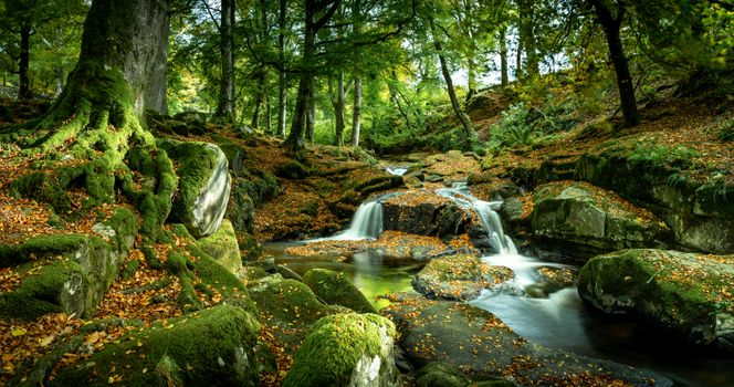 Photo free stream, autumn leaves, landscape
