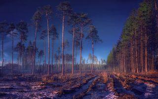 Фото бесплатно закат, поле, сосновый лес