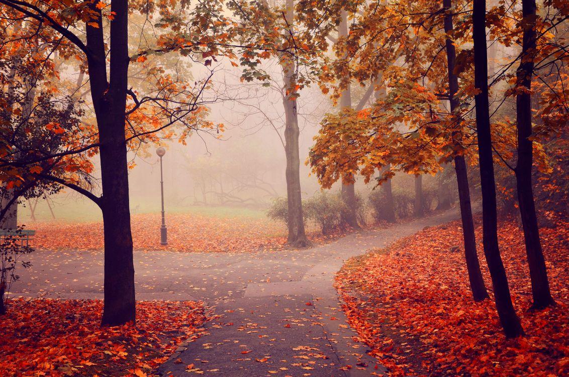 Фото бесплатно осень, туман, парк, дорога, деревья, осенние листья, краски осени, природа, пейзаж, пейзажи