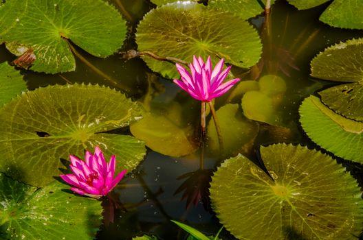 Photo free a pond, a burdock, flowers