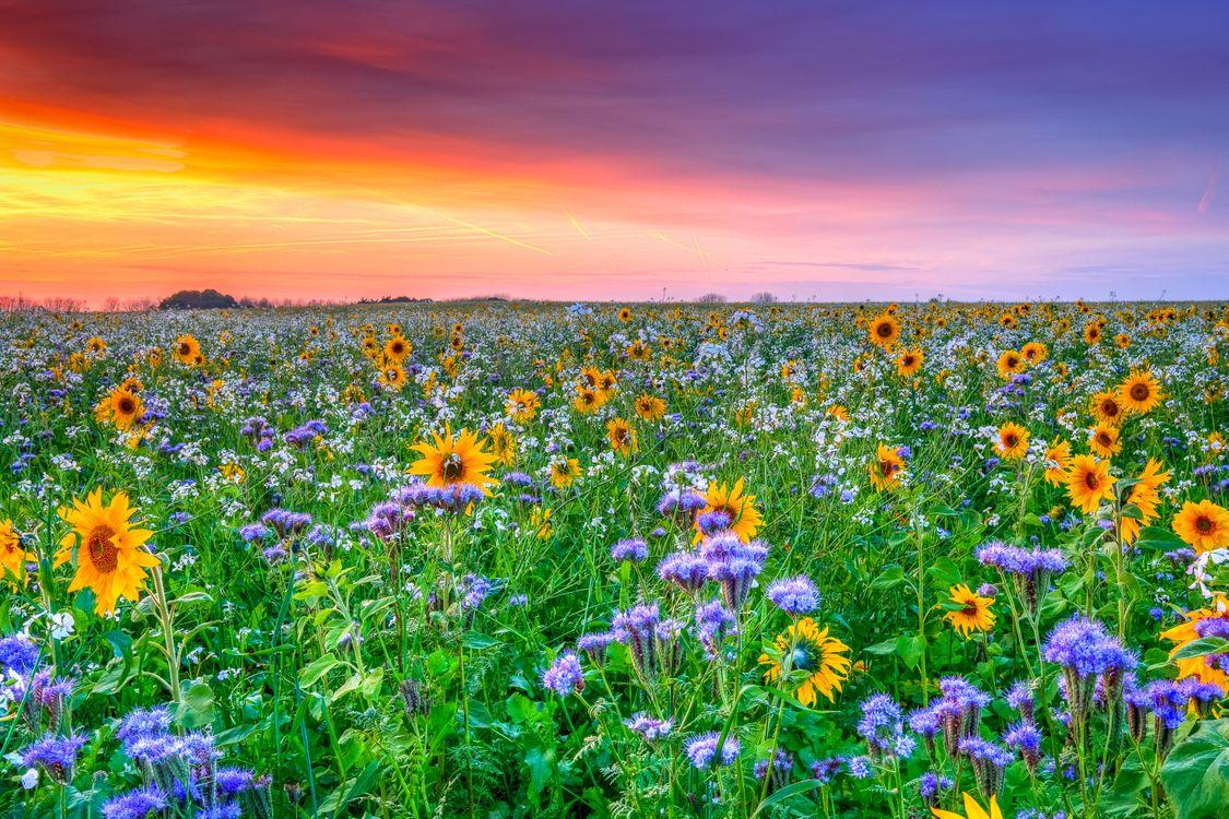 Цветочное поле · бесплатное фото