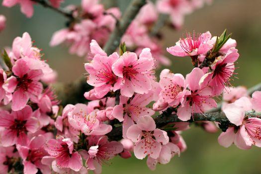 Заставки цветы, яркие, лепестки