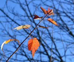 Заставки Осень, лист, лес