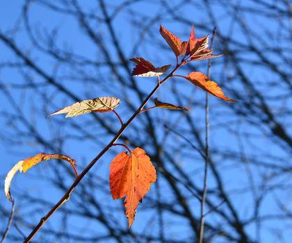 Фото бесплатно Осень, лист, лес