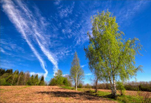 Фото бесплатно небо, березы, деревья