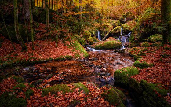 Photo free trees, Germany, autumn colors