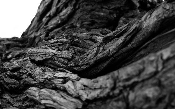 Photo free tree bark, roots, monochrome