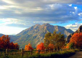 Фото бесплатно красочный, лес, листья
