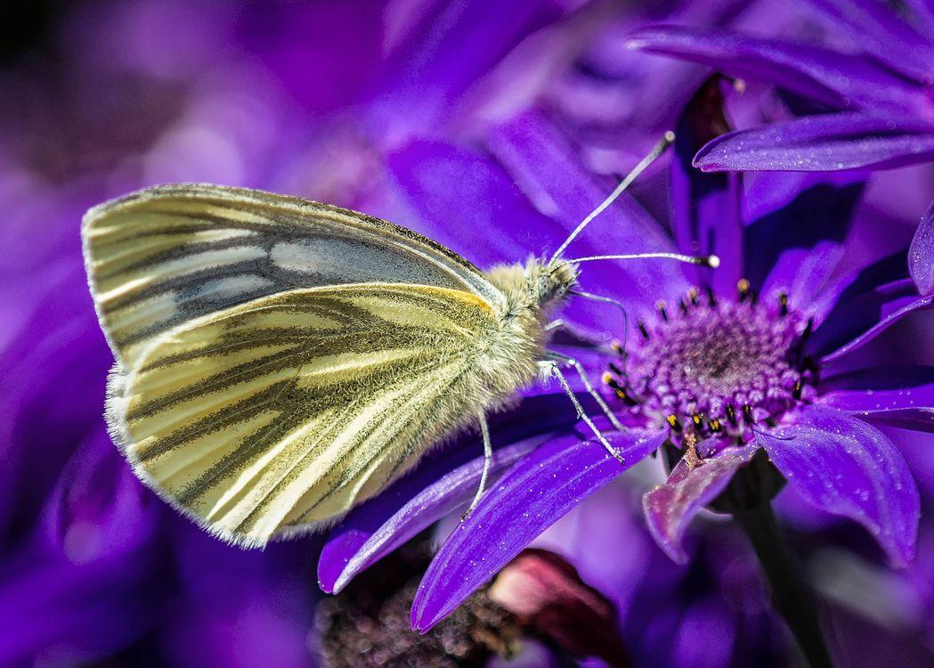 Фото бесплатно мотылек, бабочка, на цветке - на рабочий стол