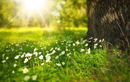 Фото бесплатно цвести, флора, цветы, трава, природа, на открытом воздухе, солнце, лучи