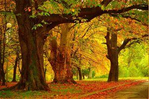 Фото бесплатно деревья, осенние листья, пейзаж