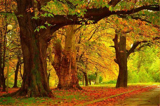 Photo free trees, autumn leaves, landscape