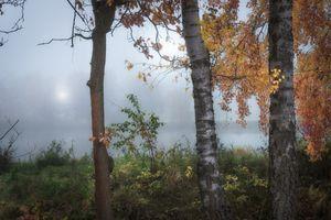 Бесплатные фото осень,озеро,туман,утро,рассвет,деревья,осенние листья