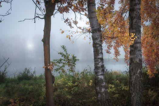 Photo free nature, dawn, autumn
