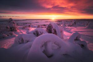 Снежный осьминог · бесплатное фото
