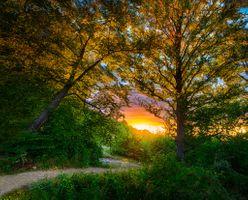 Фото бесплатно закат, дорога, лес