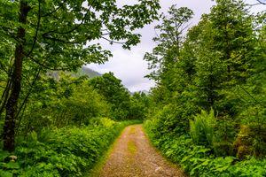 Заставки природа, Австрия Бад-Гаштайн лес, дорога