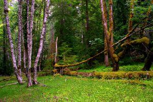 Заставки Национальный Парк Маунт-Рейнир, лес, деревья