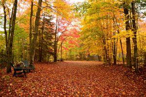 Бесплатные фото осень,парк,лес,деревья,осенняя листва,природа,пейзаж