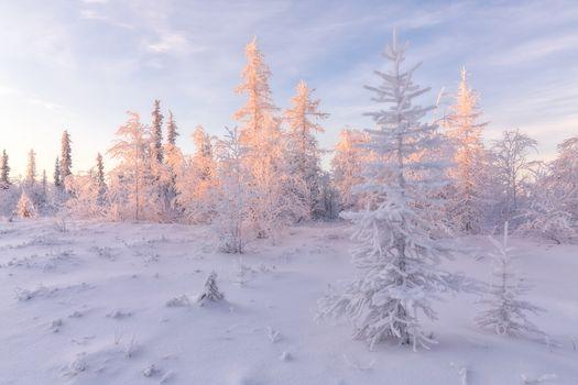 Заставки пейзаж, деревья, лесотундра