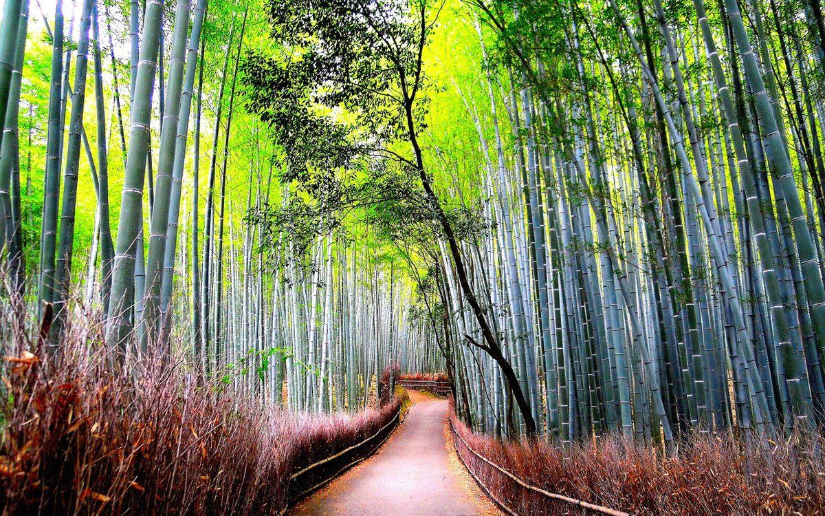 Бамбуковый лес · бесплатное фото