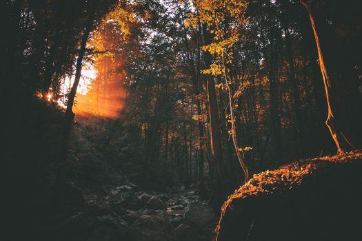 Фото бесплатно темно, рассвет, окружающая среда