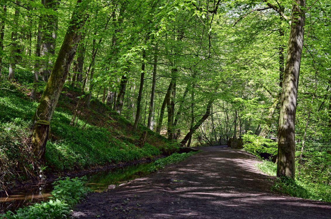 Фото бесплатно Тропа, холмы, деревья - на рабочий стол