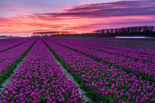 Photo free sea of flowers, sunset, field