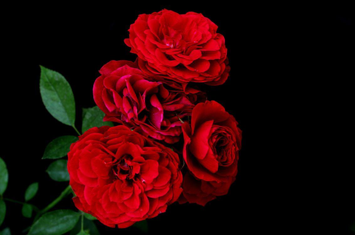 Цветы ночью · бесплатное фото