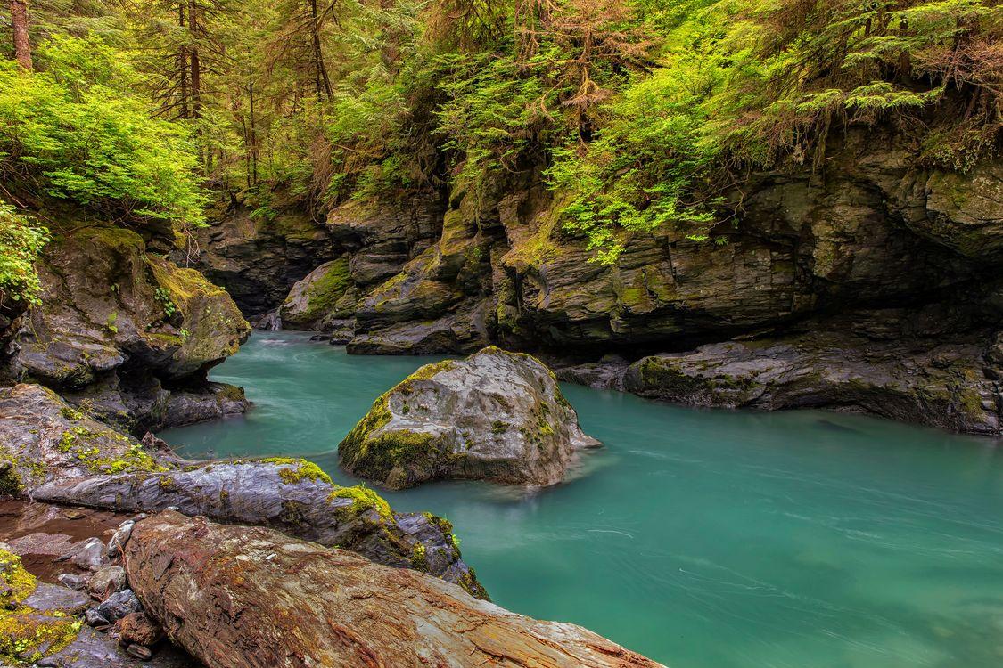 Фото бесплатно лес, река, скалы, деревья, природа, пейзаж, пейзажи