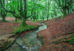 Заставки Otzarreta,Баскония,Страна Басков,Испания,лес,деревья,речка
