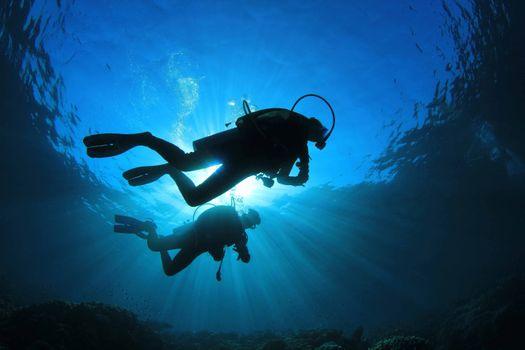 Фото бесплатно дайвер, дайвинг, океан, подводное, морской, подводный