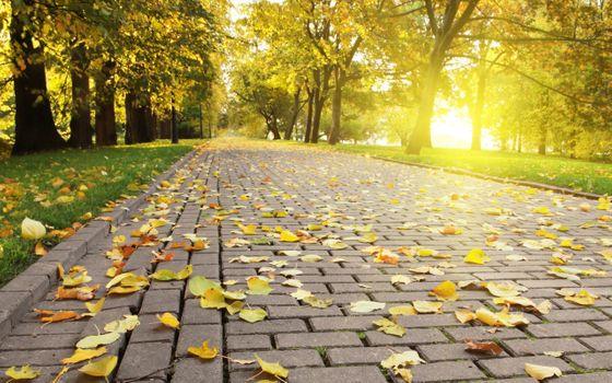 Фото бесплатно опавшие, листья, парки