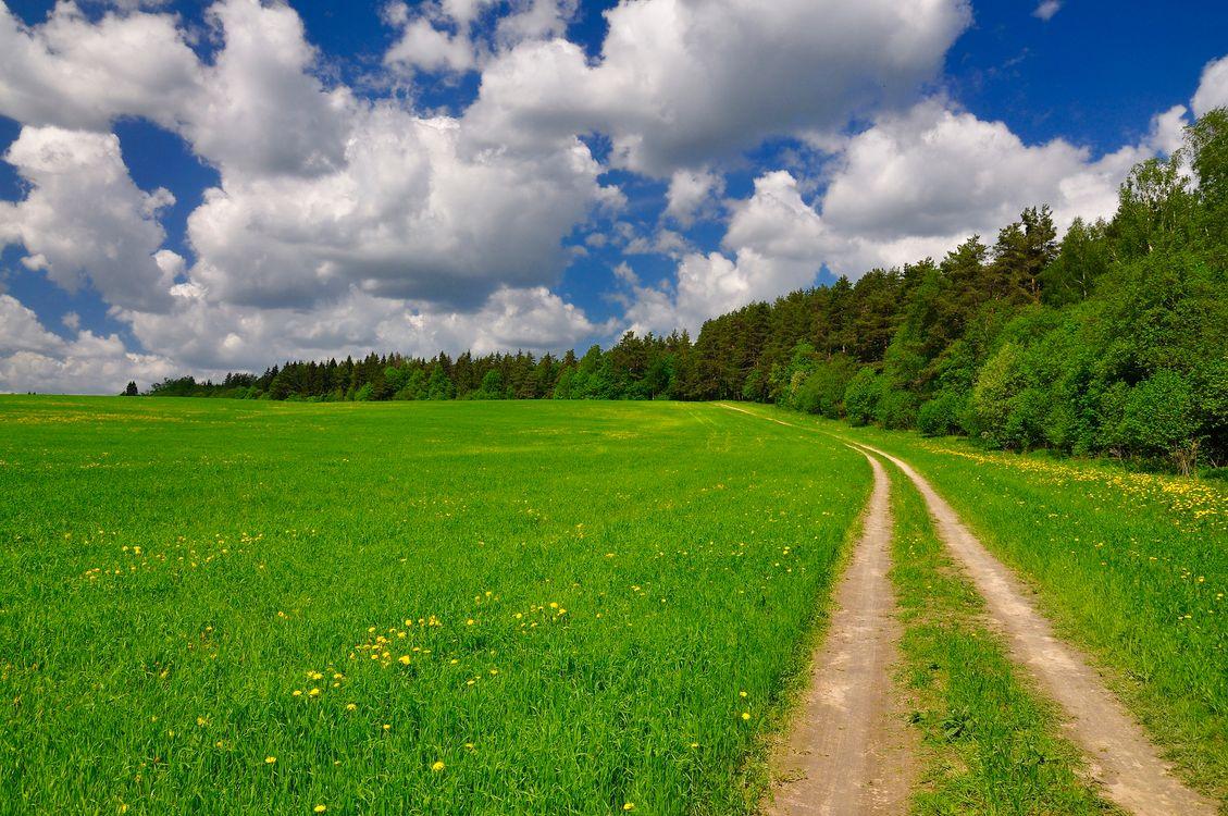Фото бесплатно поле, дорога, лето, трава, деревья, небо, облака - на рабочий стол