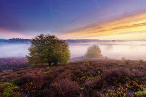 Фото бесплатно поле лаванда, туман, рассвет